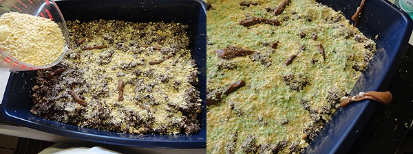 Kitty Litter Cake Recipe Gross Halloween Party Food - Kitty litter birthday cake