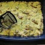 An overhead photo of a kitty litter cake.