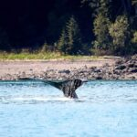 Icy Strait Point – Whale Watching