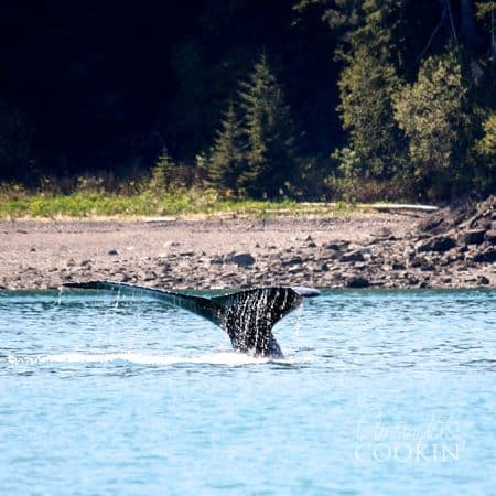 Go on a whale watching excursion in Icy Straight Point - we went through Princess Cruises!