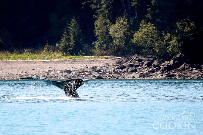 Whale excursion at Icy Strait Point
