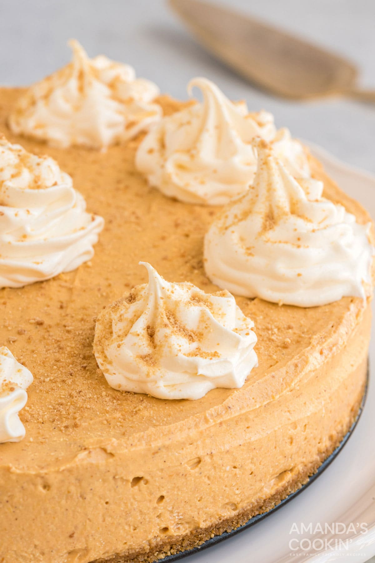 no bake pumpkin cheesecake with whipped topping garnish